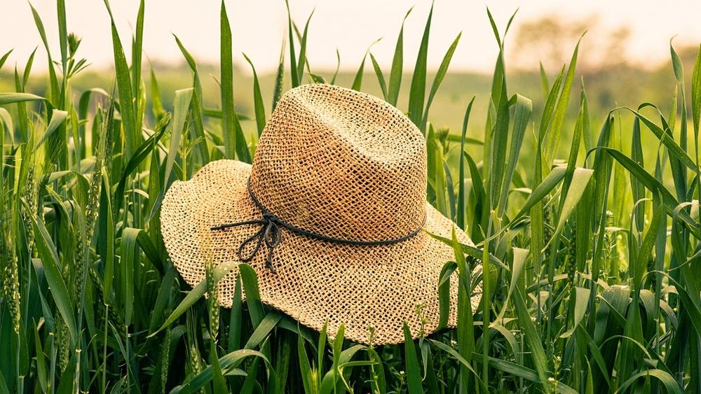 麦わら帽子 草